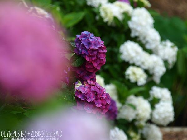 P6267670_edited1_2